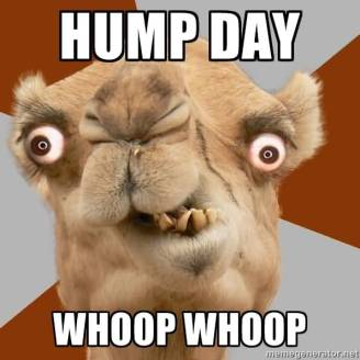 Hump-Day-Funny-Camel-Face-Picture